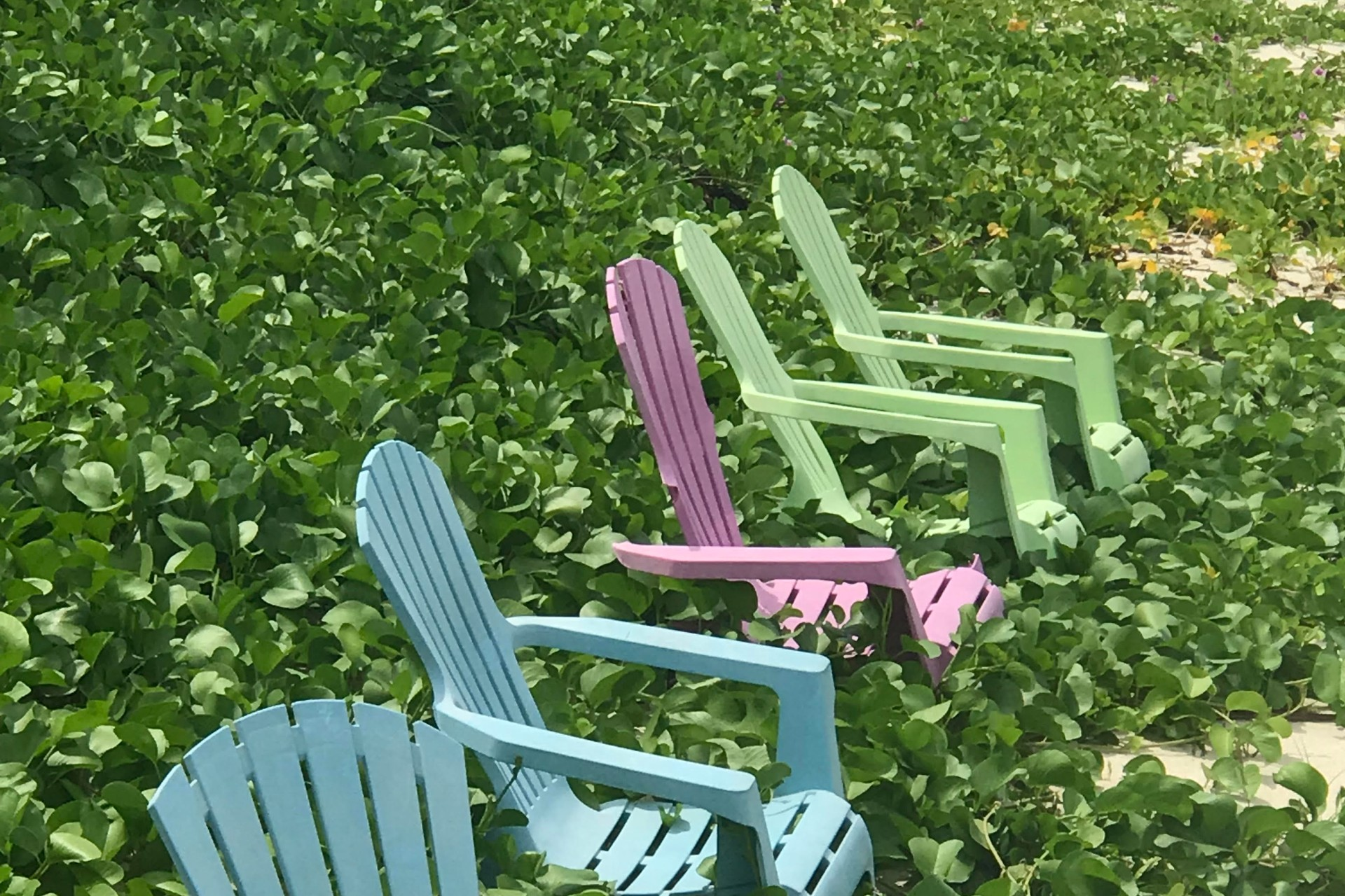 blue, pink, and green beach chairs in the sand with a vine growing over them